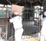 Lagos state government seals Agege Central Mosque over attack on COVID-19 Taskforce (photos) 13